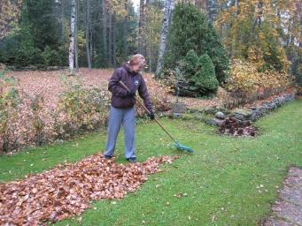 Pirms ziemas iestāšanās veicamie darbi