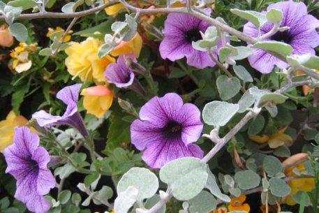 Biolan Augsne vasaras puķēm
