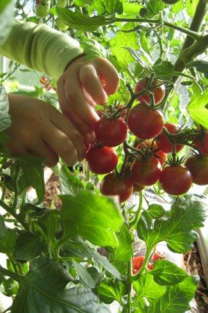 Biolan Augsnes maiss augu audzēšanai