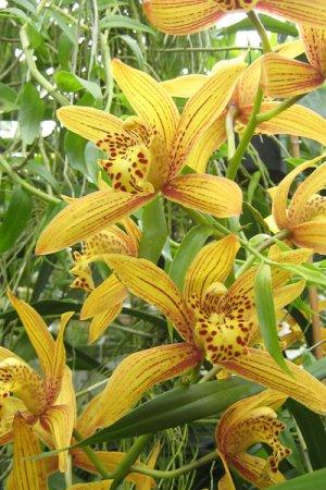 Biolan Augsne orhidejām