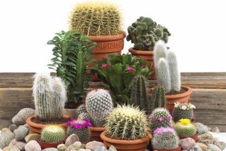 Biolan Augsne kaktusiem