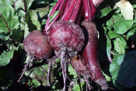 Biolan Dabīgais mēslojums kartupeļiem un dārzeņiem