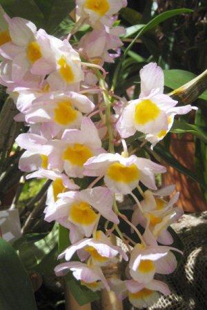 Biolan Mēslojums orhidejām RAIN MIX